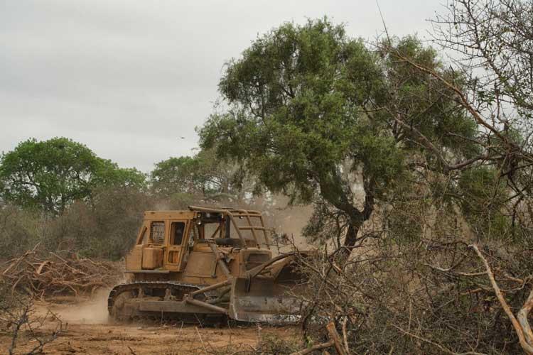 «Chaco», tierra de conflicto