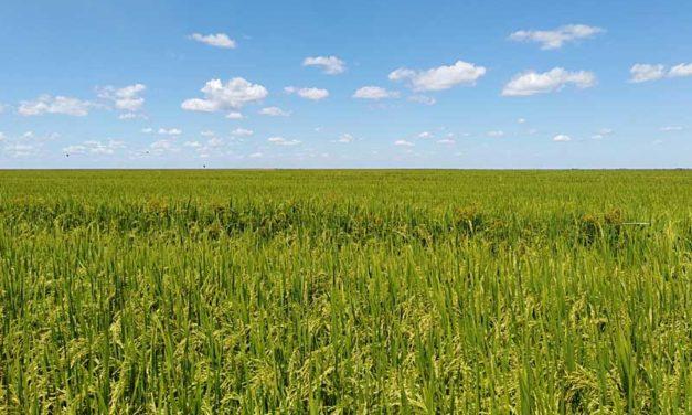 El dilema agrícola