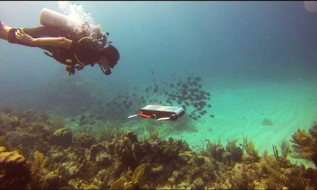 Robots cuidan arrecifes