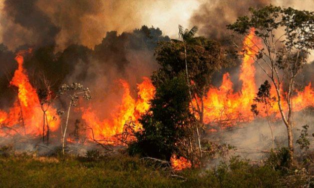 Pulmón en llamas