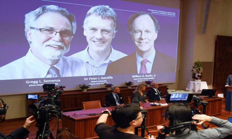 Nobel de Medicina para células y oxígeno