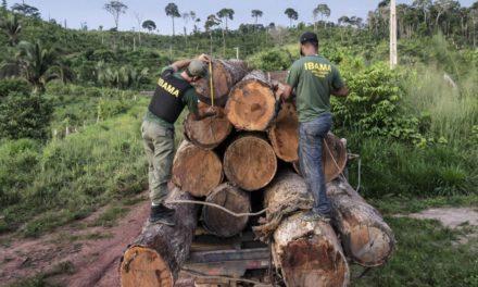 Bolsonaro contra el Amazonas
