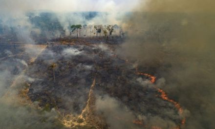 Emergencia ambiental en Brasil
