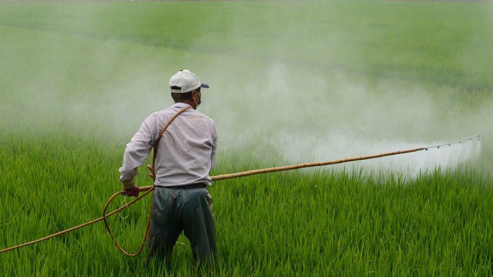 Pesticidas contra colmenas