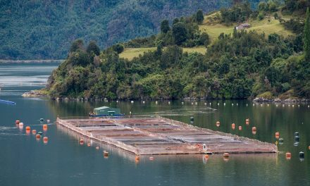 «Esta ley prohíbe la salmonicultura»